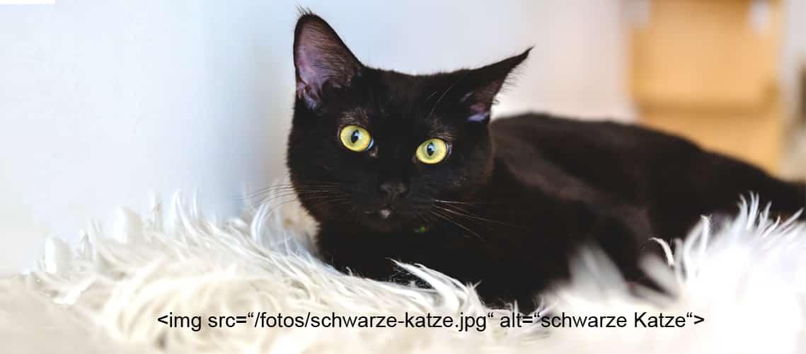 Visuell und per Text: schwarze Katze